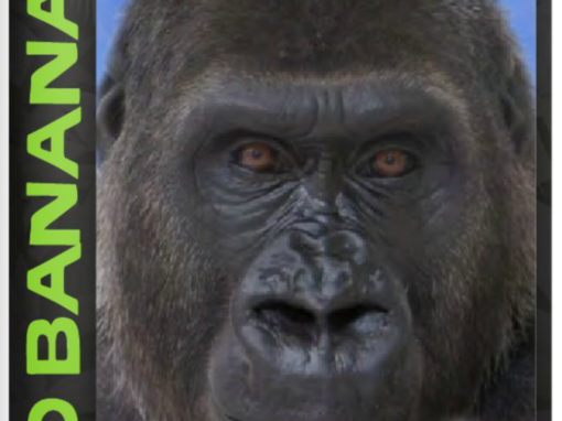 Gorilla Get-To-Know-You
